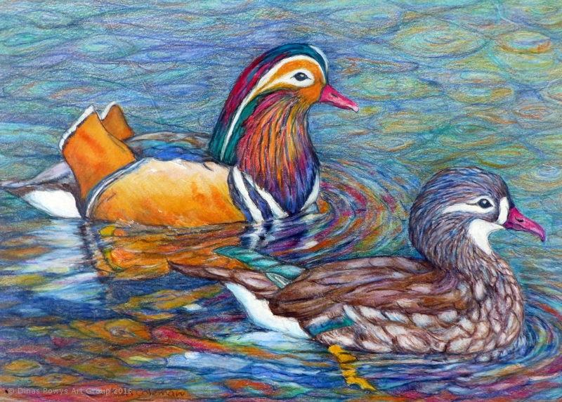Colourful Mandarins - Coloured pencil_800x572