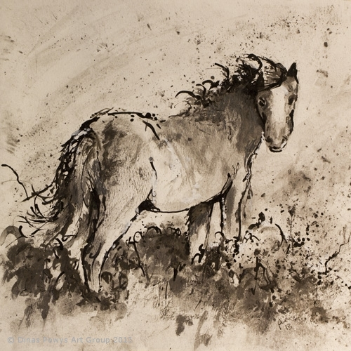 Welsh Pony 2
