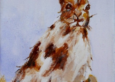 Hare On Canvas