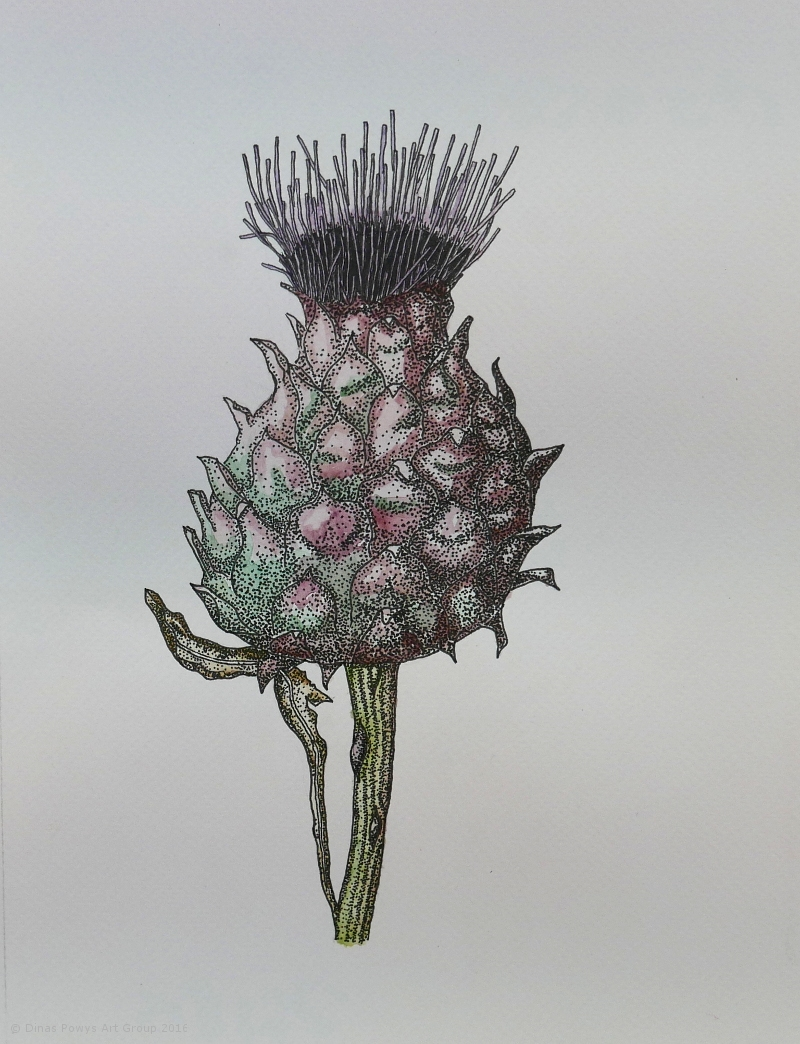 cardoon_inkwatercolour_sarabentley