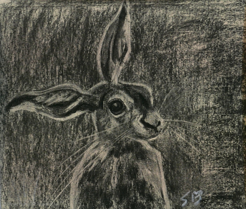 hare_charcoal_sarabentley